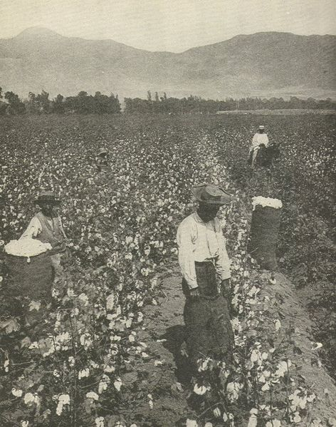 slaves picking cotton. wage workers picking cotton on