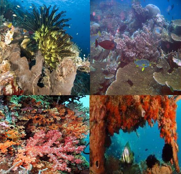 http://2.bp.blogspot.com/_RgKg6jtzaK4/TN9PCv0221I/AAAAAAAAAEI/PPXv-W5oxNA/s1600/taman-laut-wakatobi.jpg
