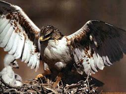 Eagles Nest Ministries