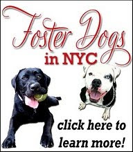 Foster Dogs in NYC