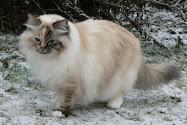 Årets Katt - Bäst i Variant 2009, 2008 och 2004Kattälskare titta in hit!