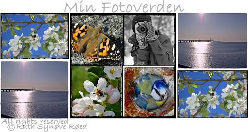Min Fotoverden
