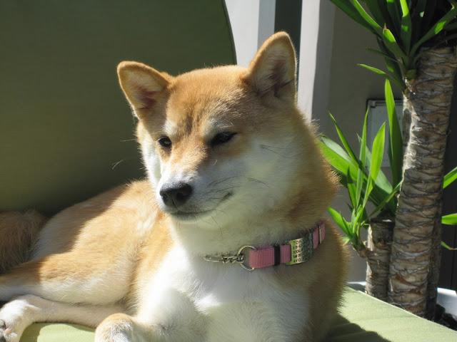 Quiet Dog Tags Uk
