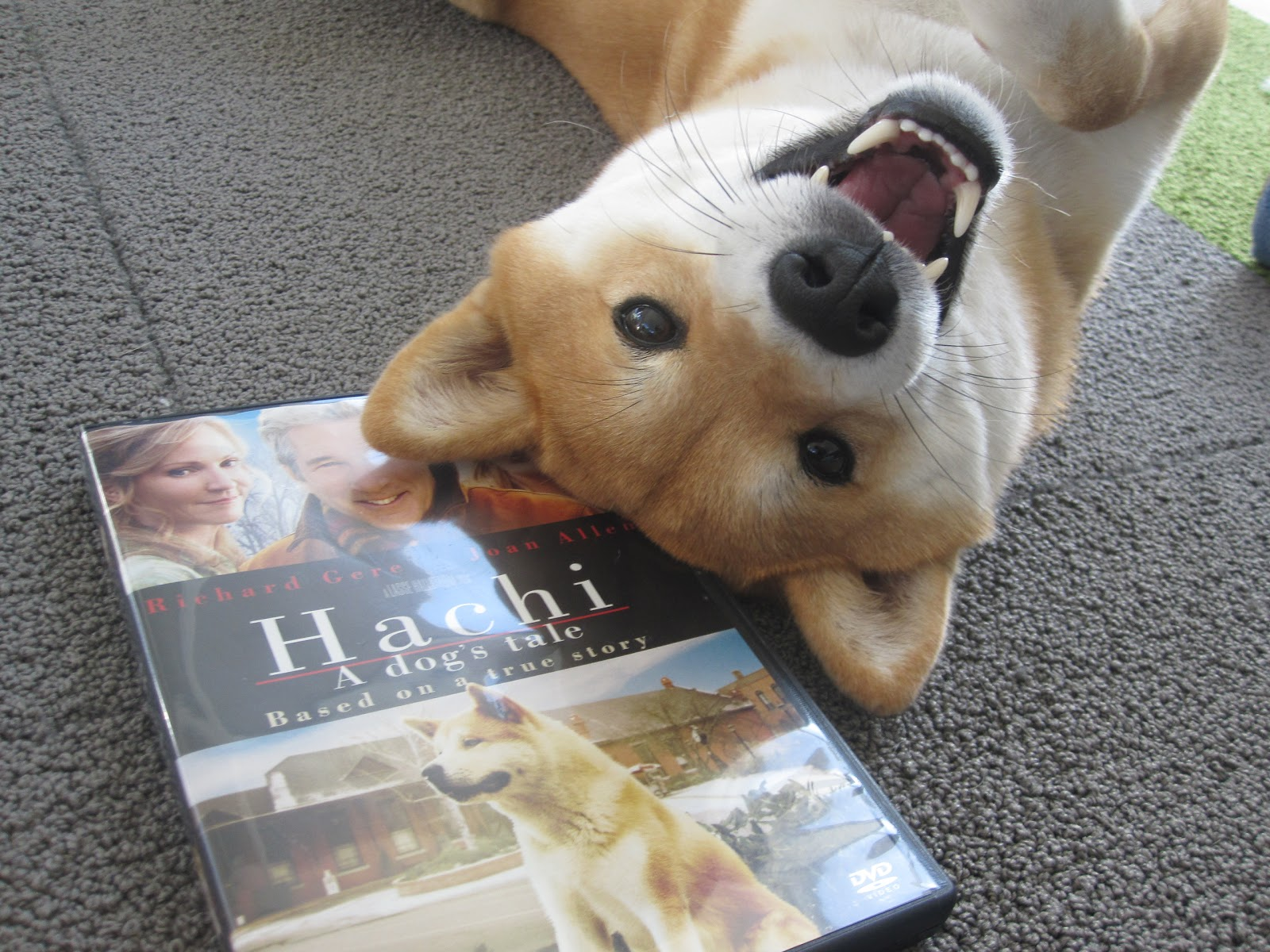 Hachi A Dog S Tale Full Movie Putlockers