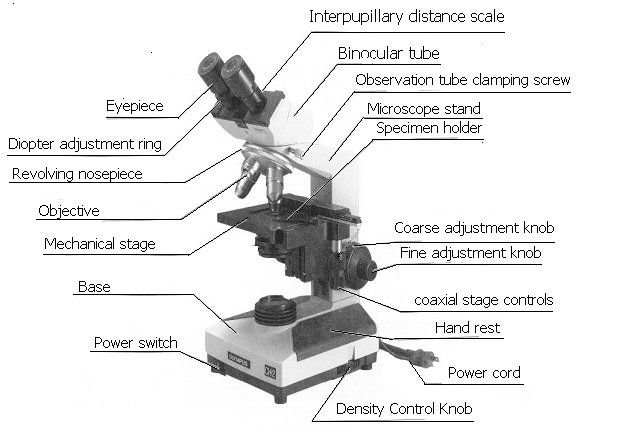 Parts of a Microscope - Buzzle