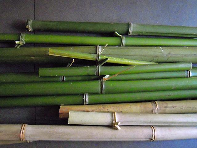 El bambu en el acuario - Reproduccion del bambu ...