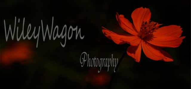 WileyWagon Photography