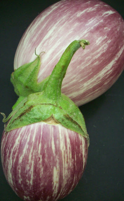 SLO STRIPED EGGPLANT