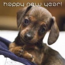 New Year Puppy Card
