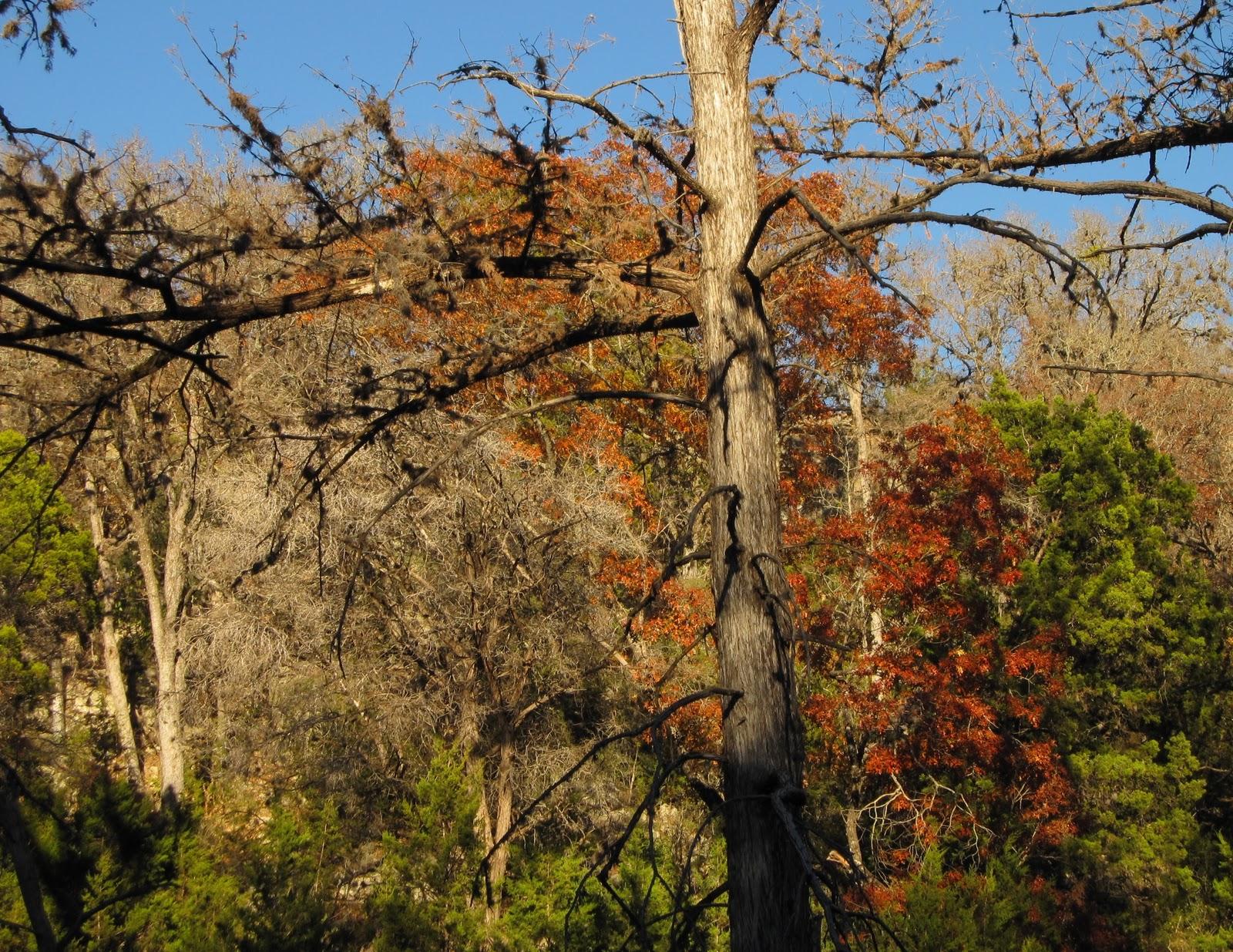 : Hamilton Pool Preserve Texas Hill Country Near Austin TX #9C762F