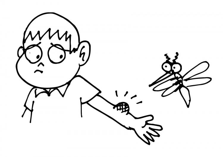 cosas que saber antes de palmar  mosquitos herb u00edvoros