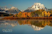 Soñando el otoño