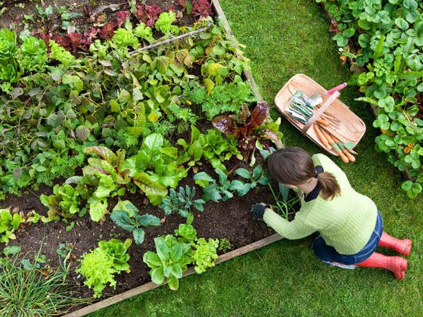 i liked the idea at first of tearing out the lawn kind of like the victory gardens from world war ii except now they would be called recession gardens - Vegetable Garden Ideas Designs Raised Gardens