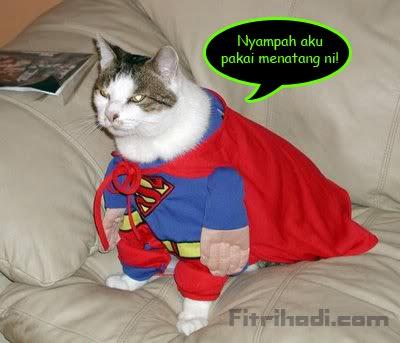 kucing gambar marah comel cantik