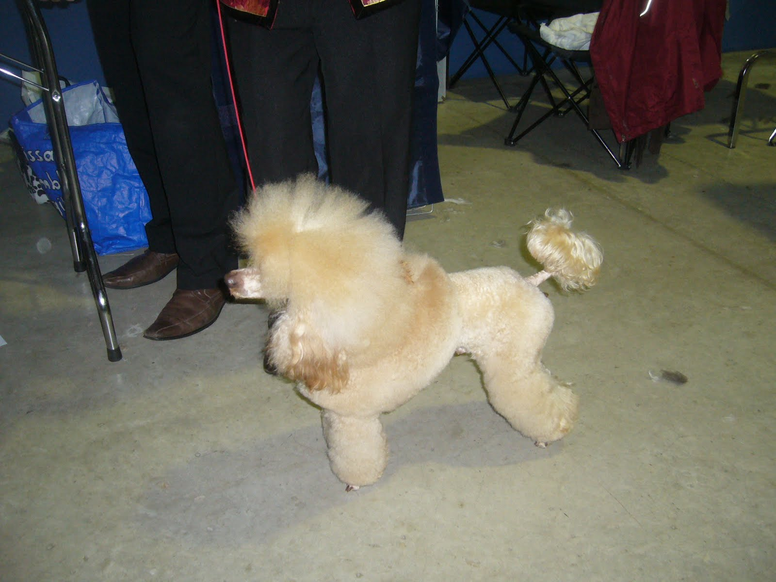 Luxembourg Dog Show April