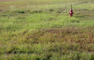 Fire Hydrant in Field