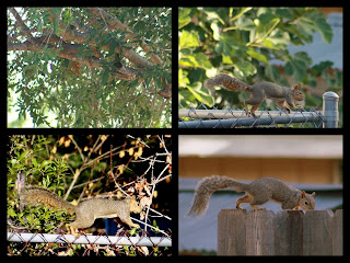 Collage of Backyard Squirrel