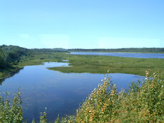 Moose River