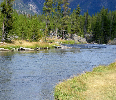 Fly fishing in yellowstone national park brief firehole for Yellowstone park fishing report