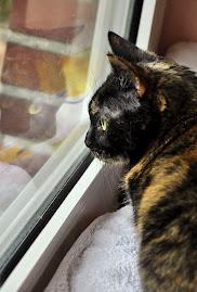 Meine Katze Kiwi am Fenster