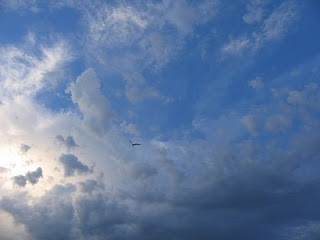 Un cielo surcado por un pájaro