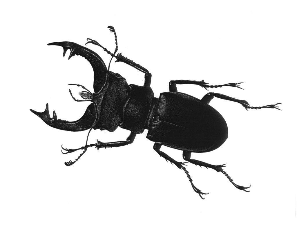[bug.jpg]