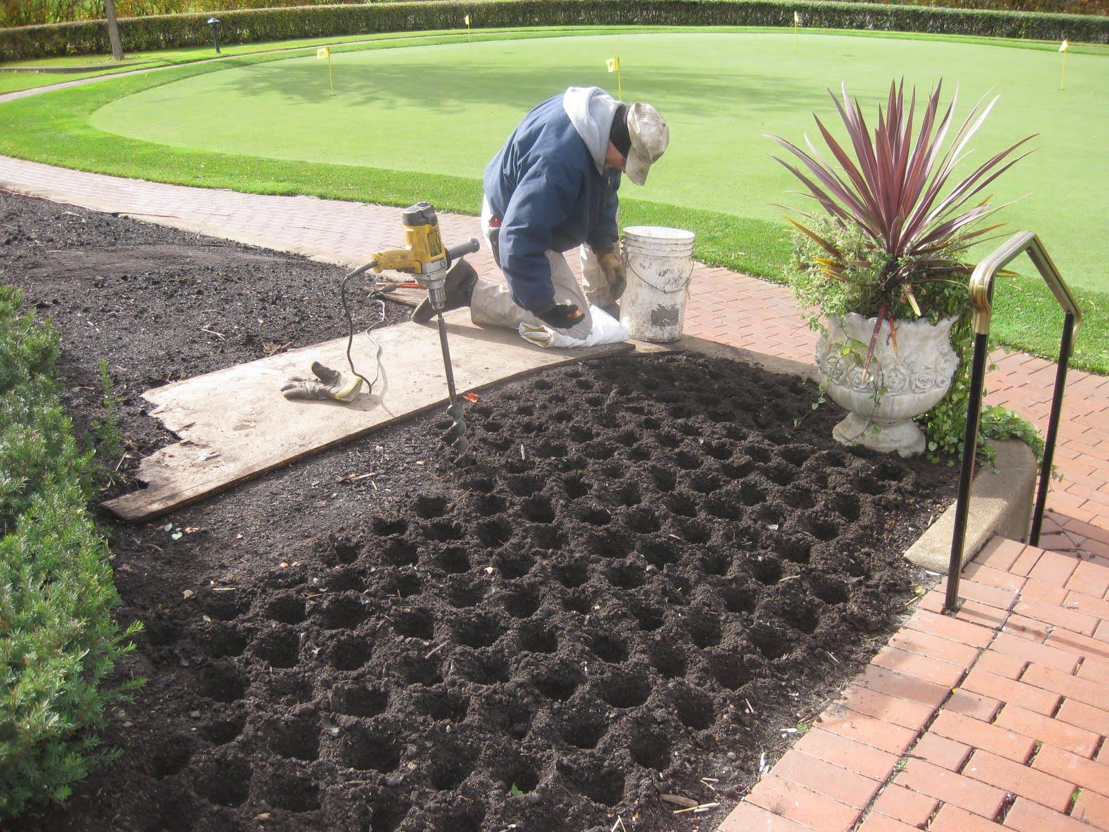garden design garden design with grow tulips indoor from seeds