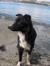 Vår første hund