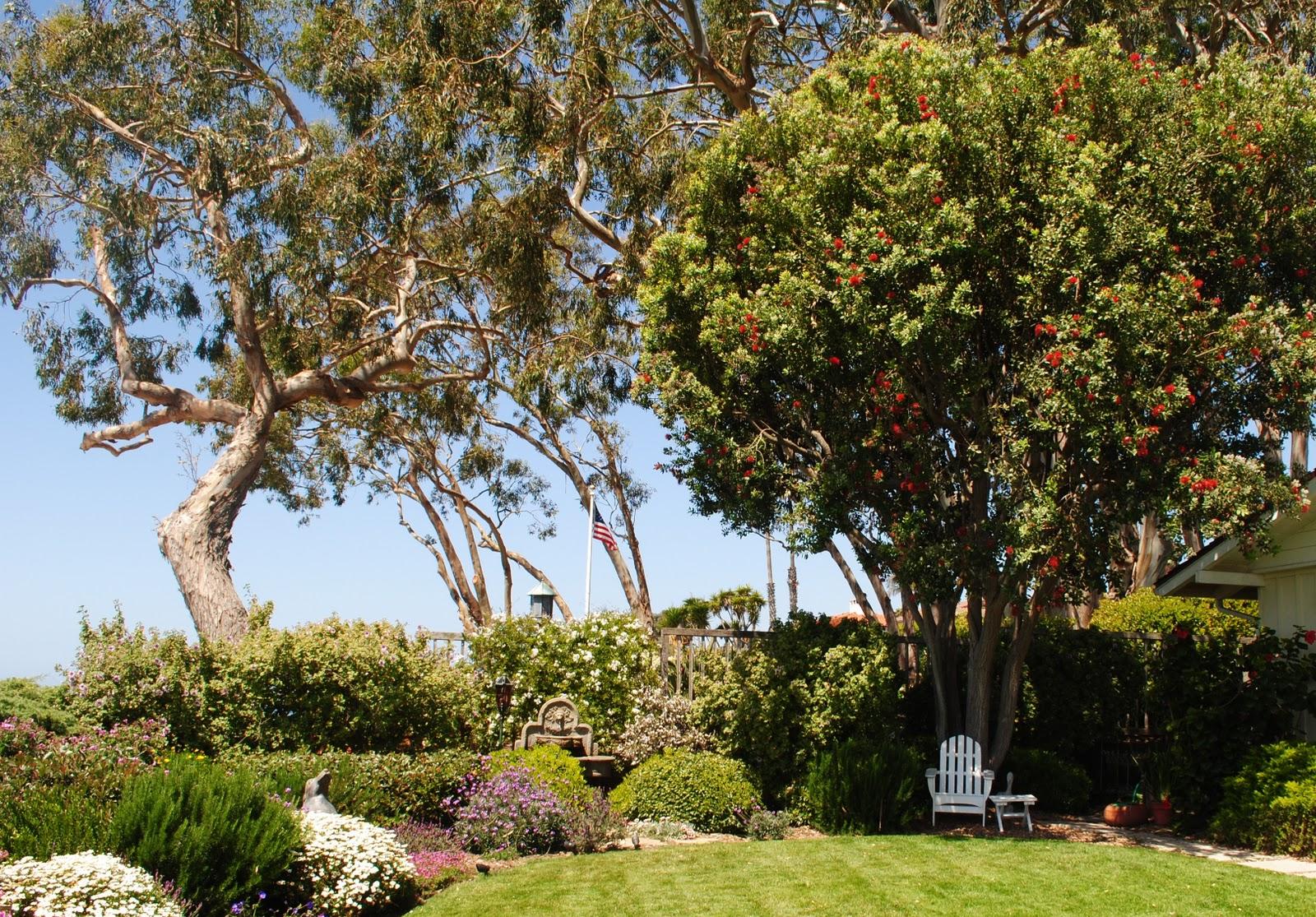 Paysage potager for Specimen trees