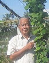 Pohon Kiwi Malaysia