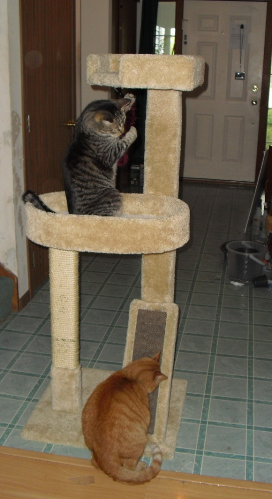 Cat Trees Scratching Post For Large Heavy Cats