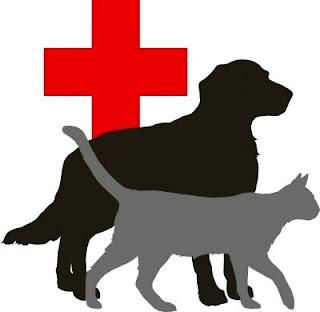 Resucitación RCP/CPR para mascotas