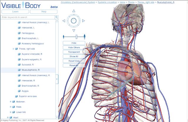 Google Body Browser para navegadores compatibles con WebGL
