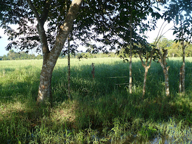 Camaron Lagoon