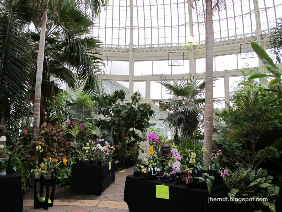 Western Ny Picture Blog Buffalo Ny Buffalo And Erie County Botanical Gardens Spring Orchid