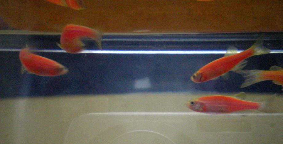 [Fishies[2].JPG]