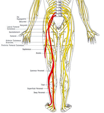 Lower Leg Nerves http://mmba.org/forum/viewtopic.php?f=1&t=113202
