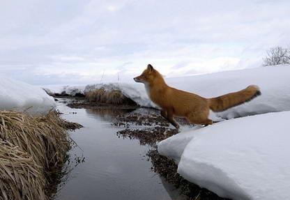 Lambang Mozilla Firefox4