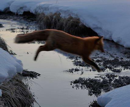 Lambang Mozilla Firefox7