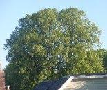 Tree May 25 2010