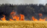 Wheat field fire, Voronezh Russia.