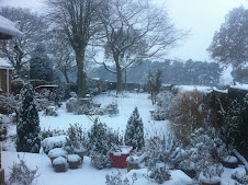 My garden in a blanket of snow!