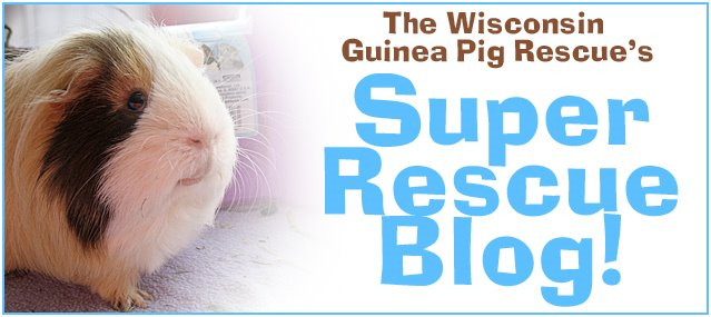 The Wisconsin Guinea Pig Rescue - Super Rescue Blog!