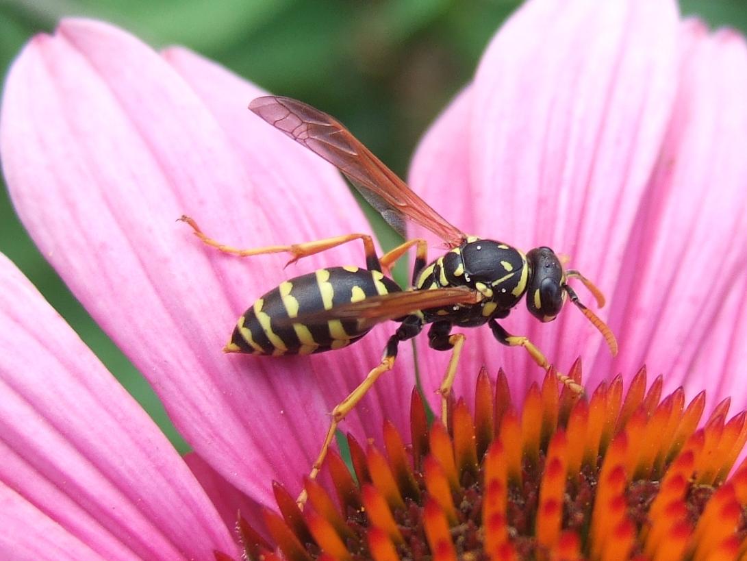 insekten im haushalt silberfischfallen ungeziefer im haus winzige insekten im haus bitte. Black Bedroom Furniture Sets. Home Design Ideas
