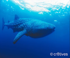 Whale Shark Watching in Donsol