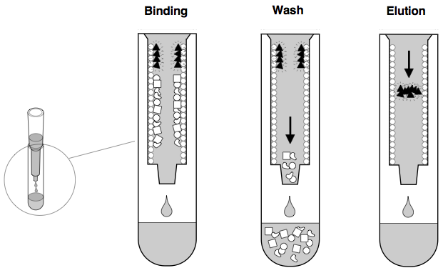 ONU Biology 217: Module 3, Lab 09 - Hydrophobic Interaction ...