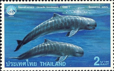 Songkhla Lake Irrawaddy dolphin