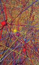 neurona cortical en actividdad