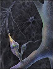 dendritas de neuronas
