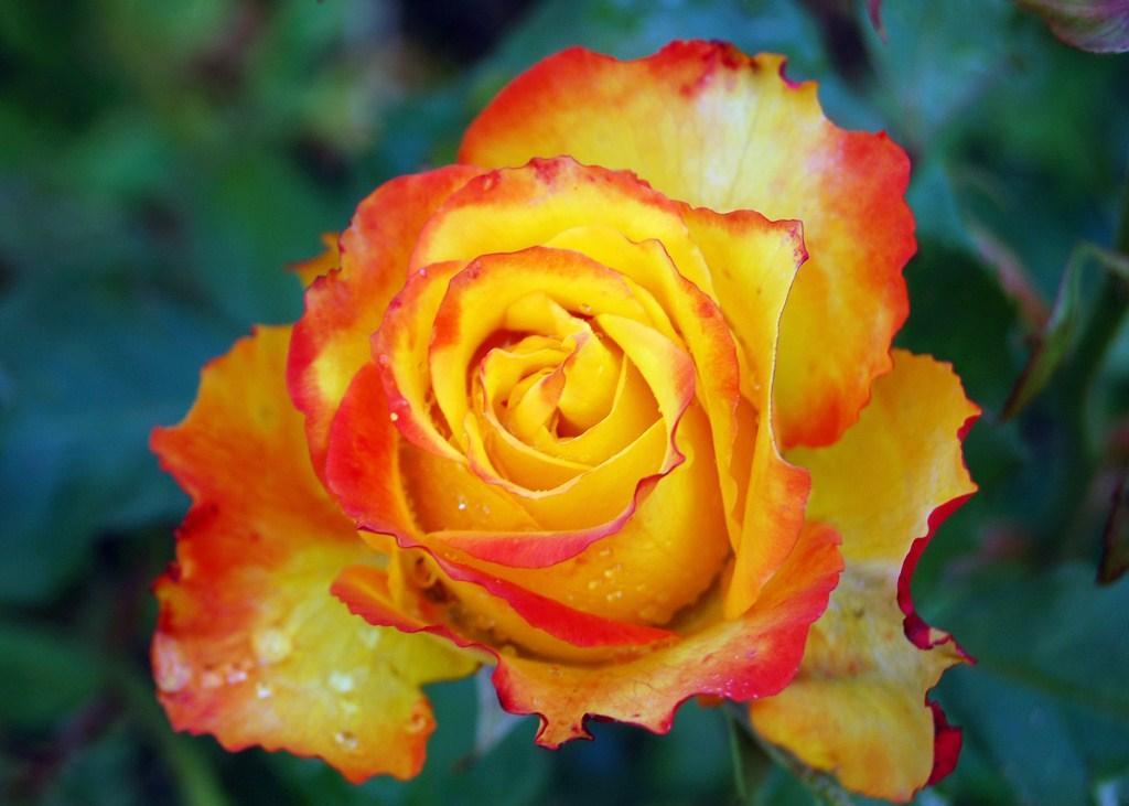 best favorite flowers in the world best flowers